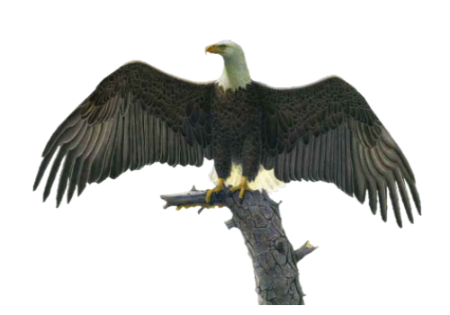 Tubes oiseaux en général  11e22496