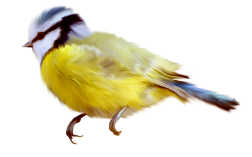 Tubes oiseaux en général  13a0cd88