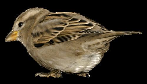Tubes oiseaux en général  201291a8