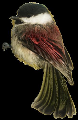 Tubes oiseaux en général  2051fb69