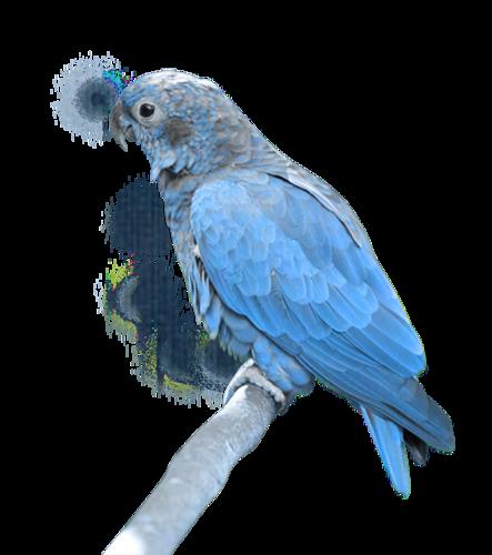 Tubes oiseaux en général  21eaf631