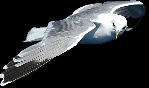 Tubes oiseaux en général  23f4c2ee