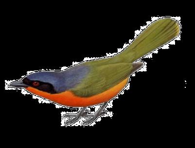 Tubes oiseaux en général  2b71689a