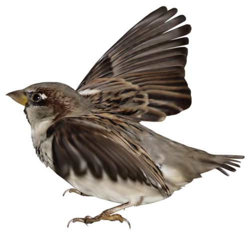 Tubes oiseaux en général  30316c77