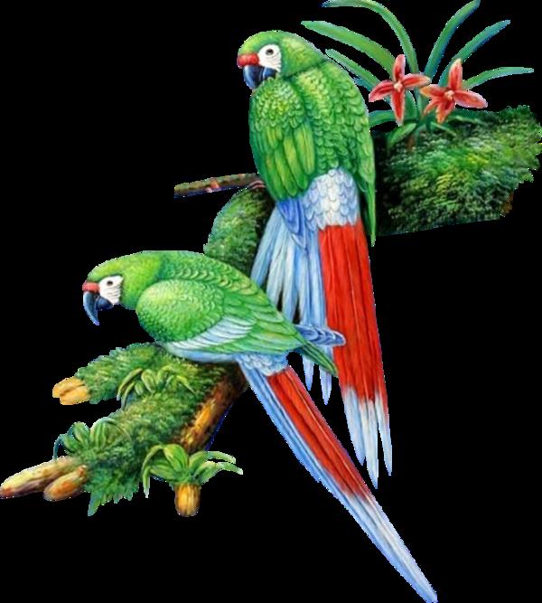 Tubes oiseaux en général  40145016