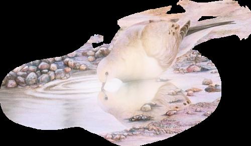 Tubes oiseaux en général  553ae561