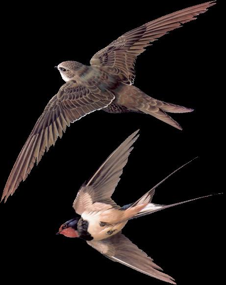 Tubes oiseaux en général  591ab337