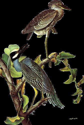 Tubes oiseaux en général  60bf8721
