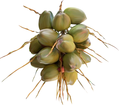 fruit axotique