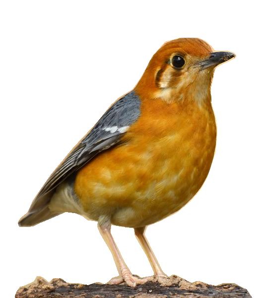 Tubes oiseaux en général  83786265