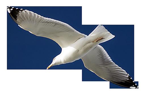 Tubes oiseaux en général  8d1952c2