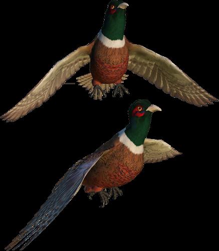 Tubes oiseaux en général  92f1e83d