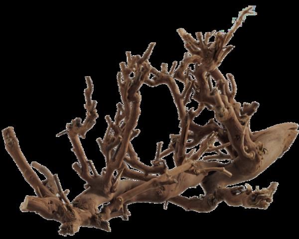 Tubes arbres feuilles branches 6 - Souche d arbre decorative ...