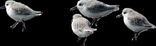 Tubes oiseaux en général  Aec21c5d