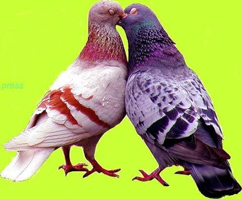 Tubes oiseaux en général  B002e93c