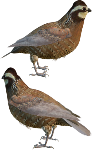 Tubes oiseaux en général  B9dce5be