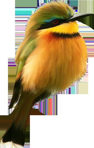 Tubes oiseaux en général  Bac9733c