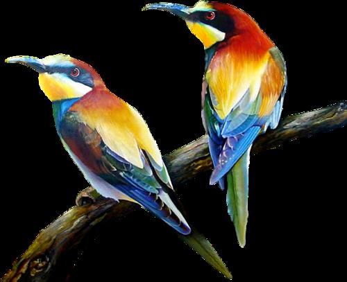 Tubes oiseaux en général  C604bb40