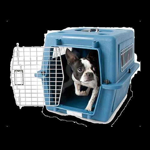 cage avec chien