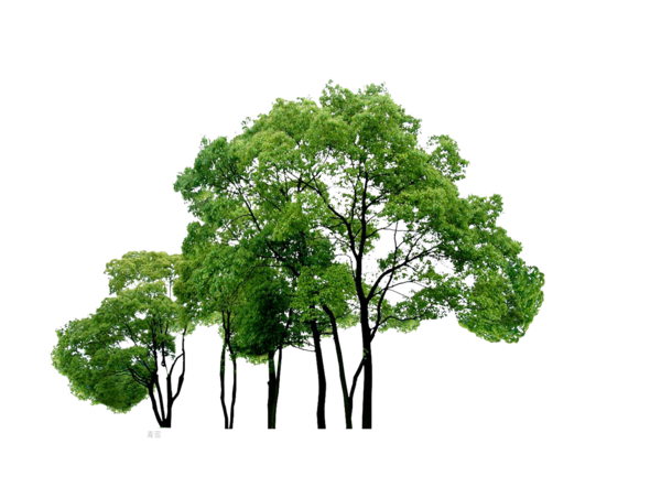 Tree PNG Images  Vectors and PSD Files  Free Download on