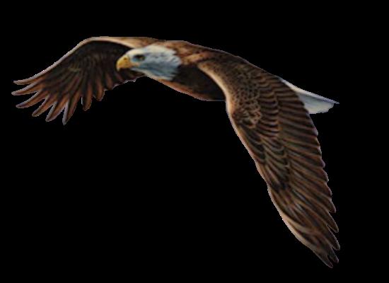 Tubes oiseaux en général  Cee0656f