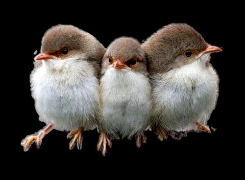 Tubes oiseaux en général  D5db5de1