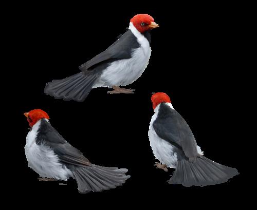 Tubes oiseaux en général  D892c6aa