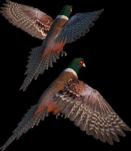 Tubes oiseaux en général  E582fac5