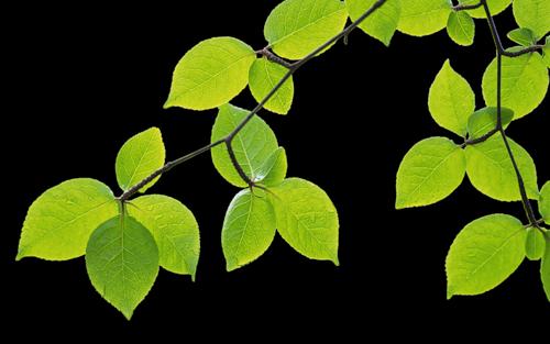 Tubes arbres feuilles branches 7 page 3 - Branche arbre dessin ...